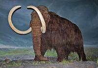 Royal British Colombia müzesinden bir Mamut canlandırması (Wikipedia)